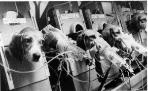 smoking-beagles.jpg
